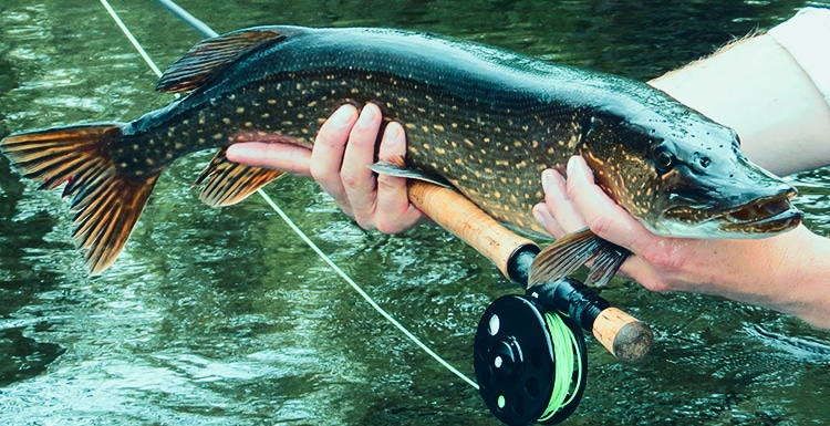 Fly Fishing Destinations: 5 Places Worth Visiting
