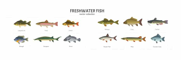 freshwater fishing types