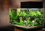 Changing Water in Fish Tanks – All You Need to Know