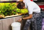 how to clean a fish tank filter